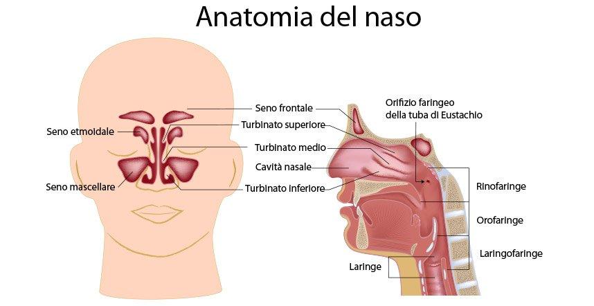 rinoplastica